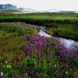 AK Landschaft